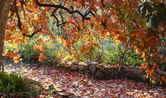 Pano_automne_3